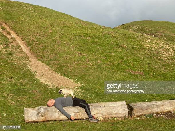 man takes a break with his pet pug - 1 minute 50 ストックフォトと画像