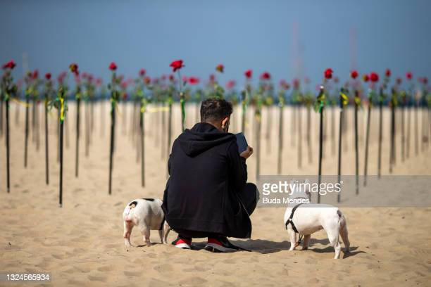Man takes a picture of the hundreds of red roses were 'planted' during an event to pay homage to the over 500,000 registered victims of coronavirus...
