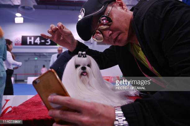 Man takes a selfie next to a Maltese dog during the 2019 Shanghai World Dog Show in Shanghai on April 30, 2019