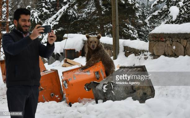 Man takes a selfie with a baby grizzly bear, which didn't hibernate and came to town, searching for food around a trash container in Inonu...