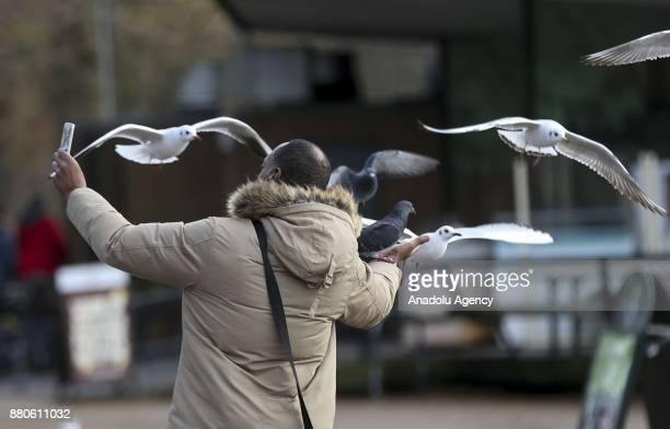 A man takes a selfie with seagulls at Hyde Park during the last days of autumn on October 28 2017 in London England