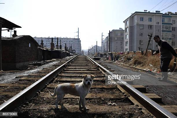 A man takes a walk with his dog along a railway at a shanty town where residents will move into lowrent apartments provided by the government on...
