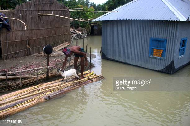 A man takes his goat to shelter after his house got affected by floods in Tangail Over million people have been affected by floods triggered by the...