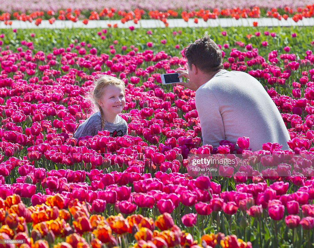 Flower Fields in Full Bloom Early In The Netherlands : News Photo