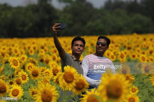 A man takes selfie with his friend in a sunflower field at Suborno Char in Noakhali Bangladesh on April 4 2019 The sunflower plantation is increasing...