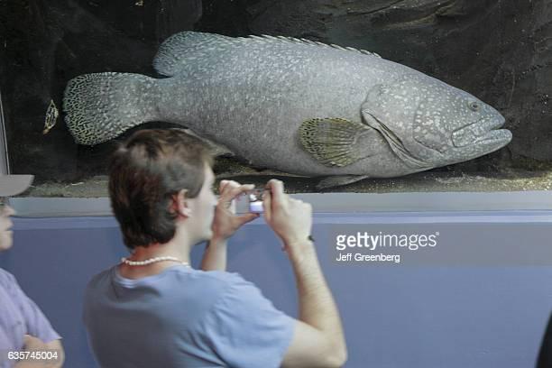 A man taking a picture of a Goliath Grouper in the Georgia Aquarium