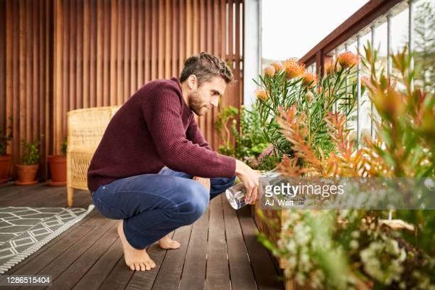 mens die de installaties verzorgt - bloem plant stockfoto's en -beelden