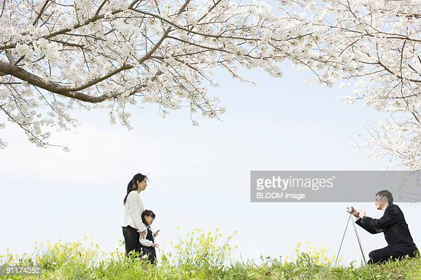 Man taking picture of wife and daughter under cherry blossom trees