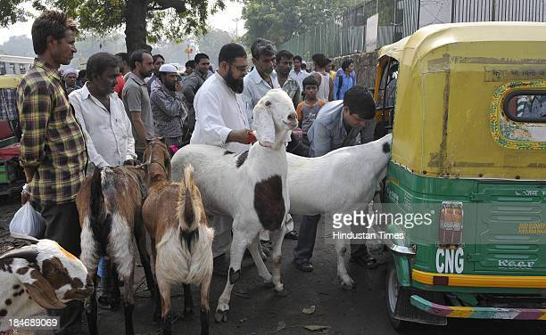 A man taking purchased goats in Autorickshaw ahead of Bakri Eid outside Jama Masjid on October 15 2013 in New Delhi India Eid alAdha or festival of...