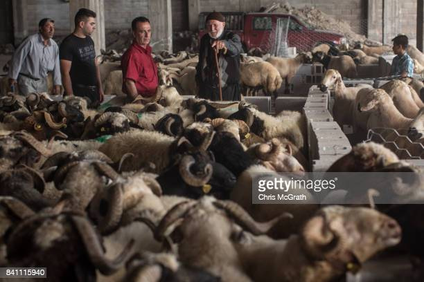 Man talks with customers looking to buy a sacrificial sheep at an animal market during celebrations to mark the Eid-al-Adha feast on August 31, 2017...