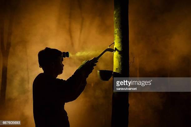 Man tapping rubber tree at night, Sakolnakhon, Thailand