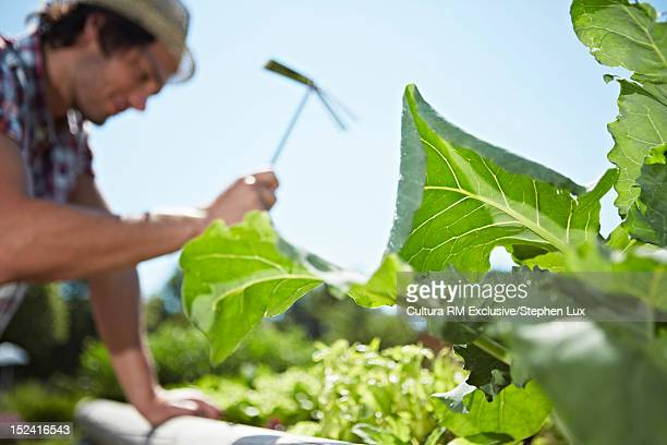 Man tending to garden outdoors