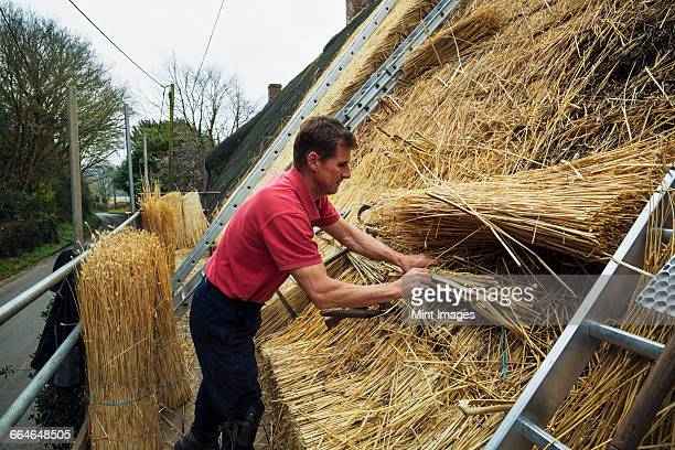 Man thatching a roof, layering and fastening yelms of straw.