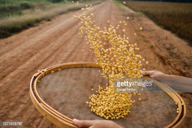 man throwing soybeans into the air - brazil stock pictures, royalty-free photos & images