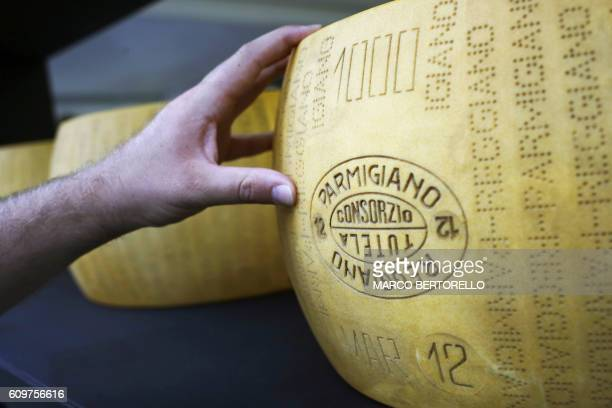A man touches a Parmigiano Reggiano cheese at a stand of the Slow Food Salone del Gusto and Terra Madre on September 22 2016 in Turin / AFP / MARCO...