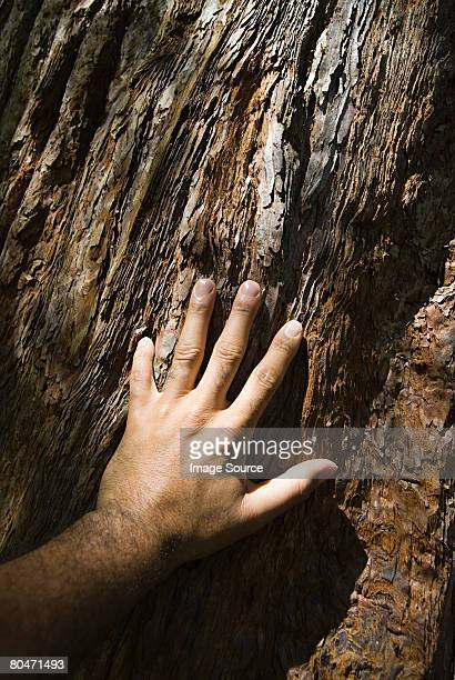 Man touching tree bark