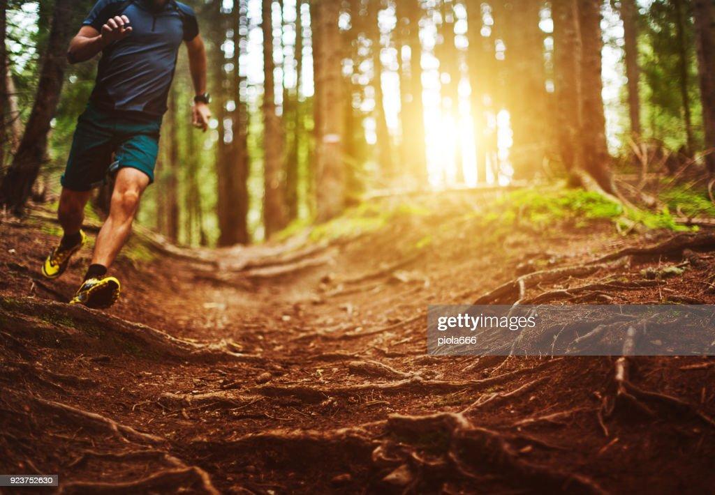 Homem correndo trilha na floresta : Foto de stock