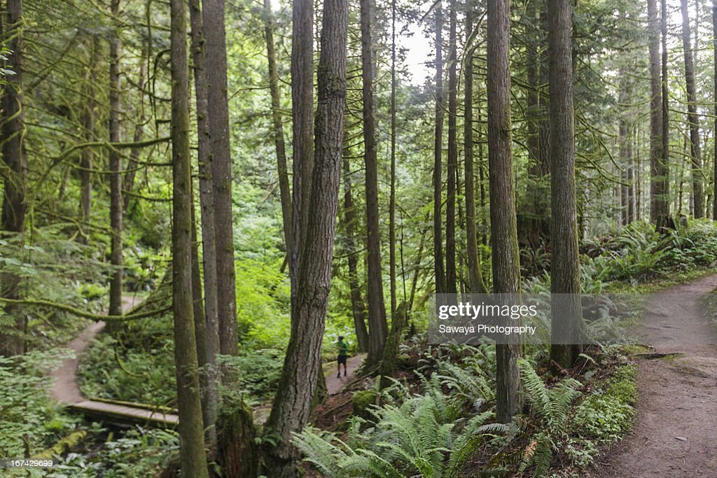 A man trail runs through old growth forest : Foto de stock