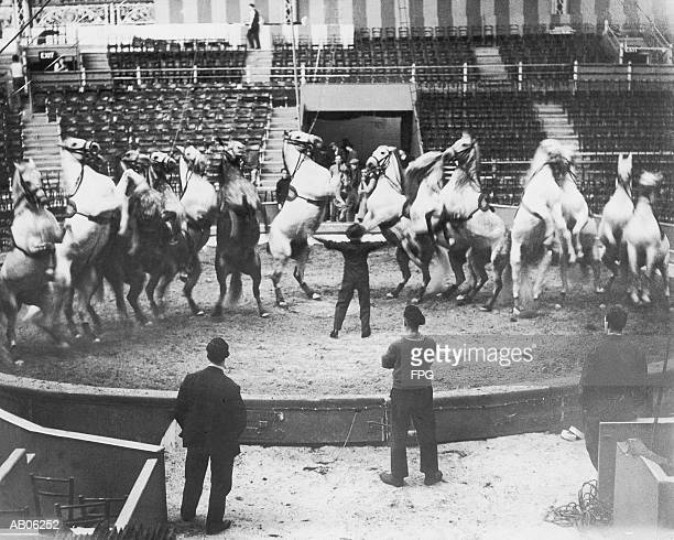 Man training performing horses, rear, elevated view (B&W)