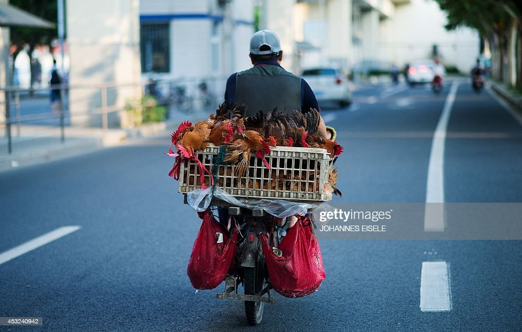 A man transports chicken on his scooter in Shanghai on August 6, 2014.