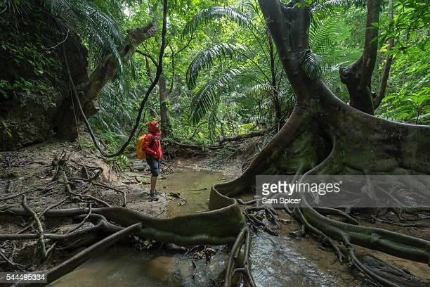 Man trekking through dense tropical Jungle scenery including a looking glass mangrove tree