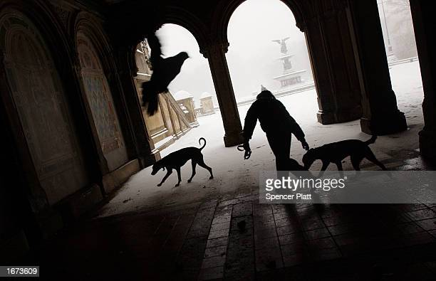 A man tries to keep his dogs away from pigeons during a snowstorm at a pavilion December 5 2002 in New York City's Central Park New York City may get...
