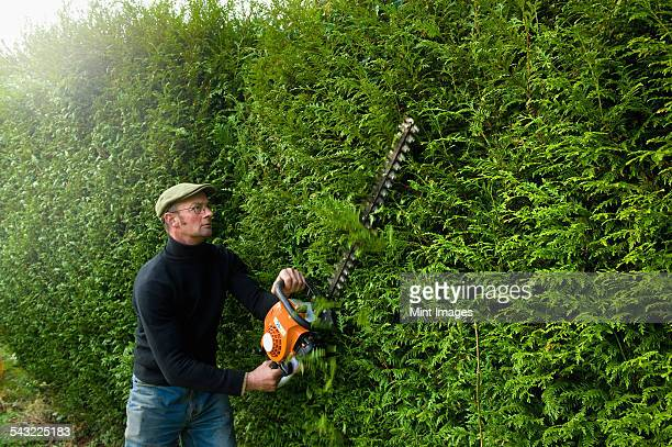 a man trimming a tall hedge with a motorized hedge trimmer. - hedge stock pictures, royalty-free photos & images