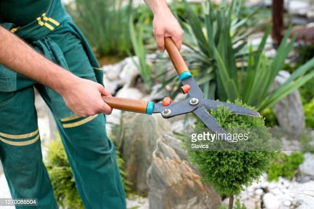 彼の裏庭で茂みをトリミングする男 - 造園師 ストックフォトと画像