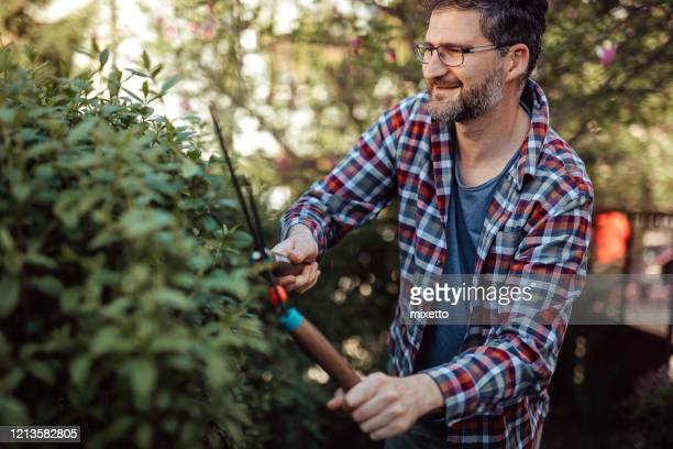 man trimming hedge during beautiful day - hedge stock pictures, royalty-free photos & images