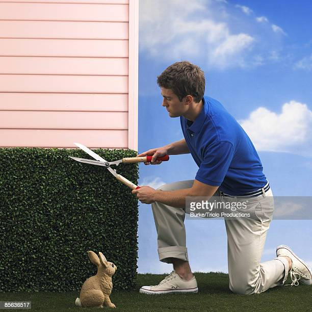 man trimming hedge near rabbit - pruning shears stock photos and pictures