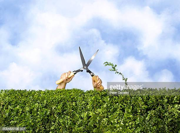 Man trimming hedge, still to cut off one piece