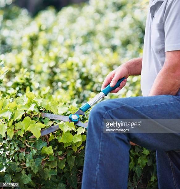 Man trimming ivy