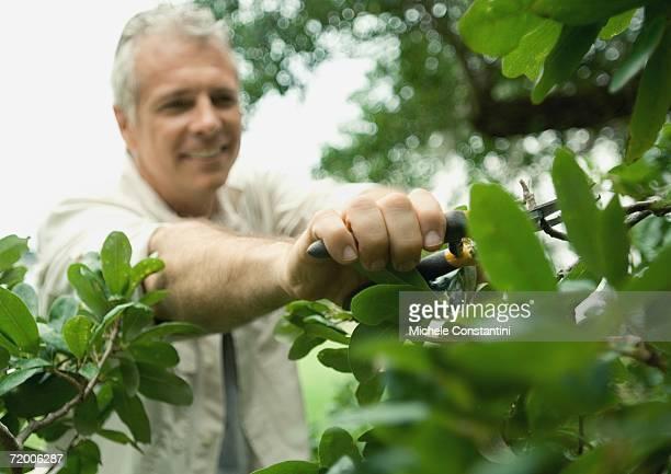 Man trimming plants
