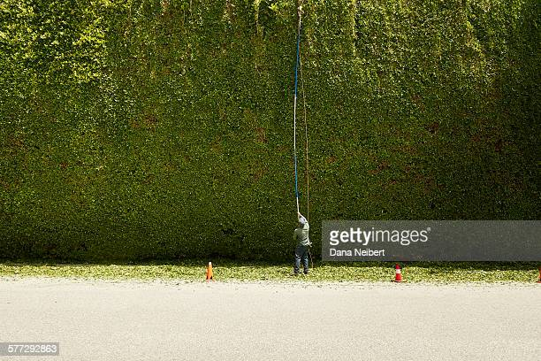 Man trimming very large hedge
