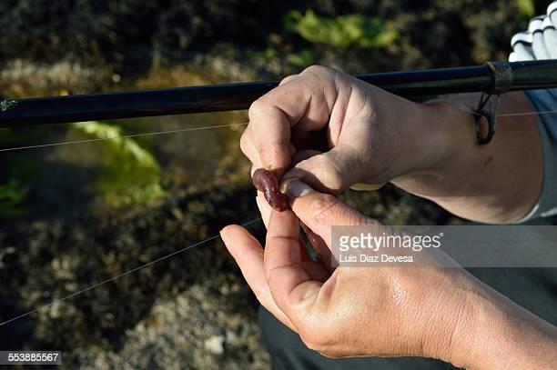 Man tying  worm on fishing line