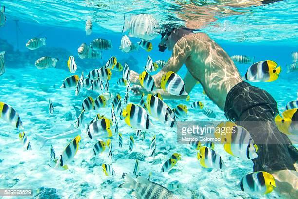 man underwater with colorful fishes, bora bora - bora bora imagens e fotografias de stock