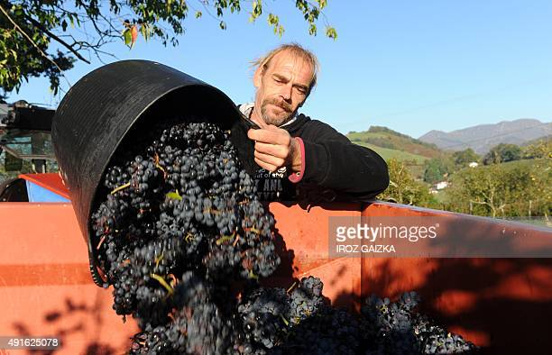 A man unloads a bucket full of grapes into a truck as grapes are harvested at the vineyard of wine maker Olivier Martin in Irouleguy on September 28...