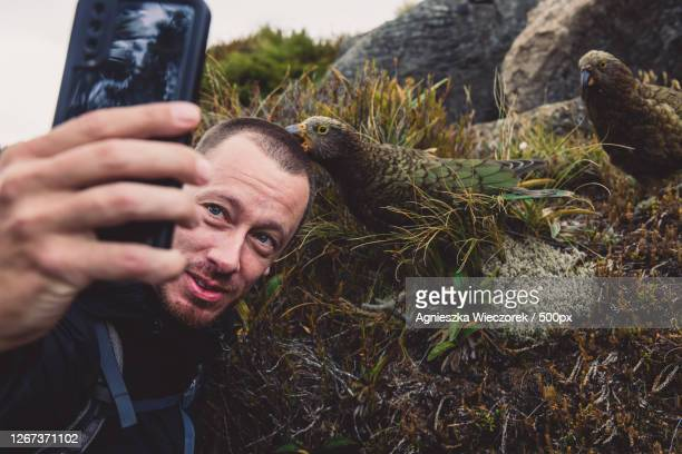 man using a mobile smartphone to take a selfie photo with colorful birds while traveling, te anau, new zealand - images stock pictures, royalty-free photos & images
