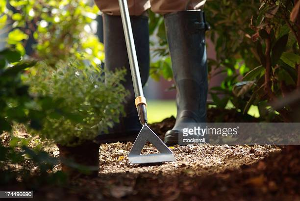 man using garden hoe - get your hoe ready stock pictures, royalty-free photos & images
