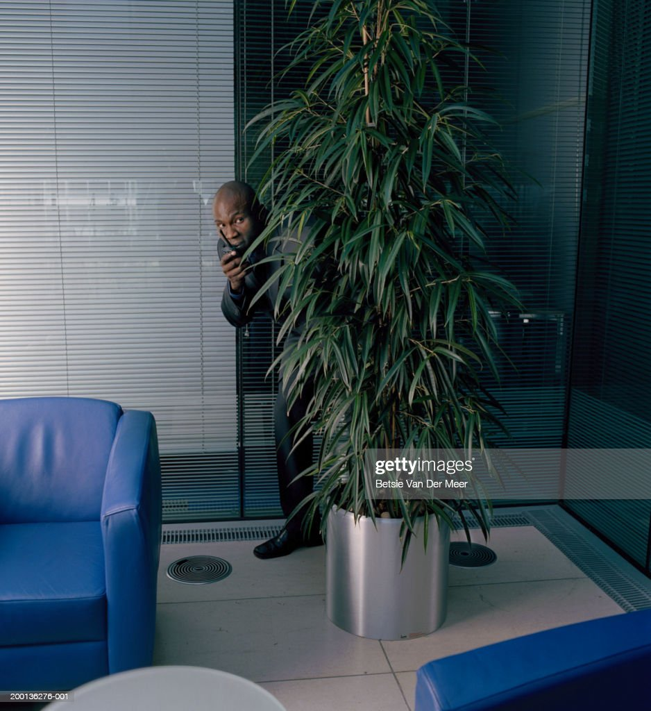 Man using walkie-talkie, body obscured by potted plant, indoors : Stock Photo