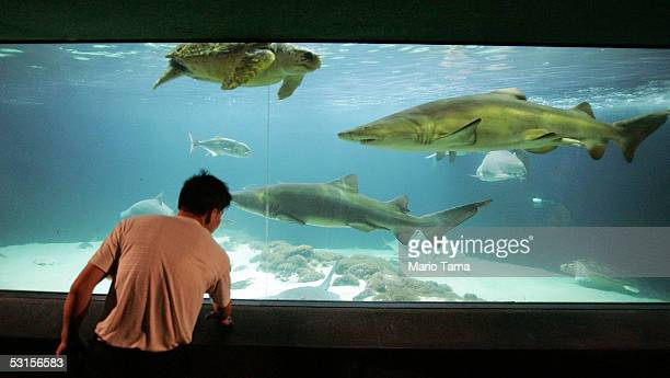 A man views a shark tank at the New York Aquarium in Coney Island June 27 2005 in the Brooklyn borough of New York City A teenage boy was attacked by...