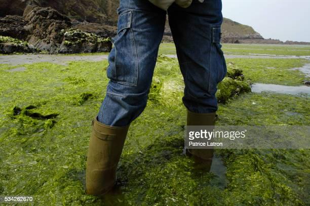 Man Wading Through Algae on Shore