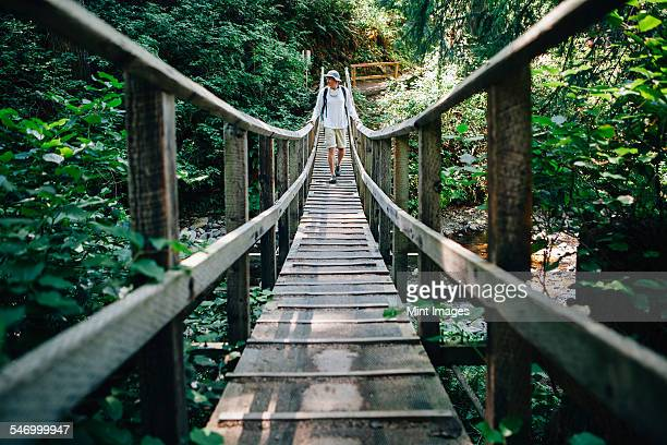 man walking across small foot bridge in lush temperate rainforest, oswald west sp or - state park stock pictures, royalty-free photos & images