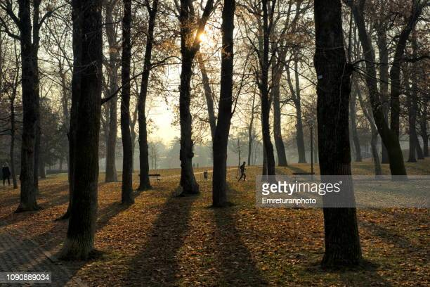 man walking along backlit trees in a public park. - emreturanphoto stock pictures, royalty-free photos & images