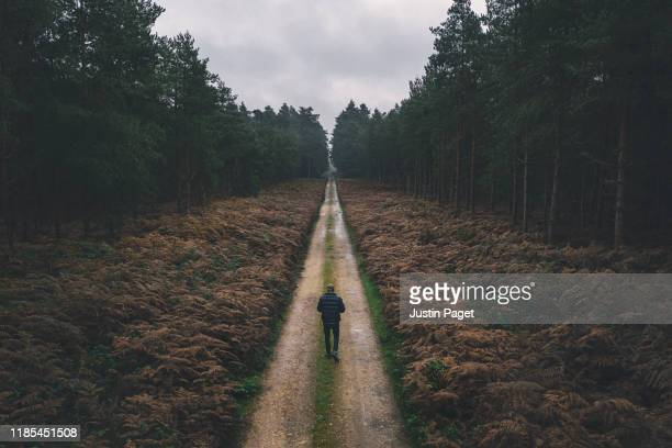 man walking along forest track - month stock pictures, royalty-free photos & images