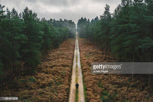 man walking along forest track - woodland stock pictures, royalty-free photos & images