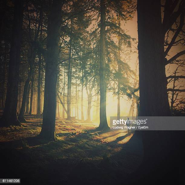 man walking amidst trees in forest - hillsborough sheffield stock pictures, royalty-free photos & images