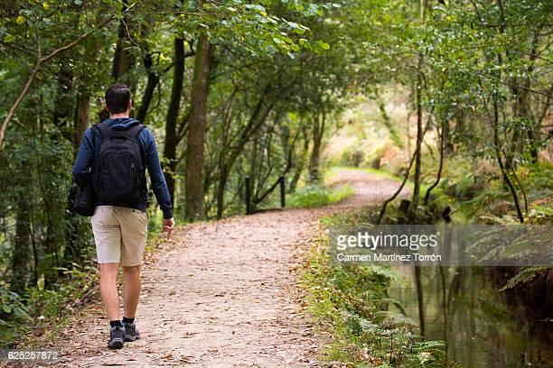 man walking at eucalyptus forest of chavin, lugo. the oldest in europe. - vivero - fotografias e filmes do acervo