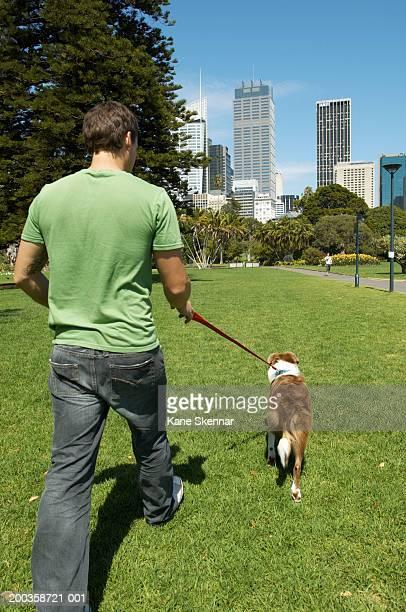 Man walking border collie in park, rear view