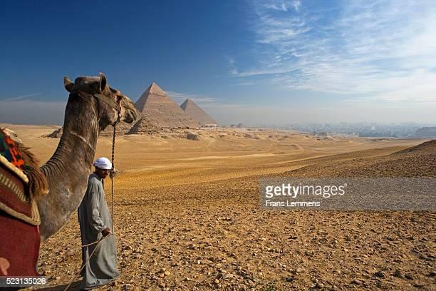 Man Walking Camel near Pyramids of Giza